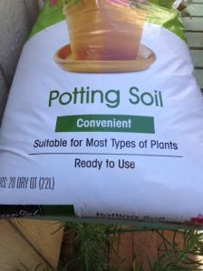 Add potting soil for plant type